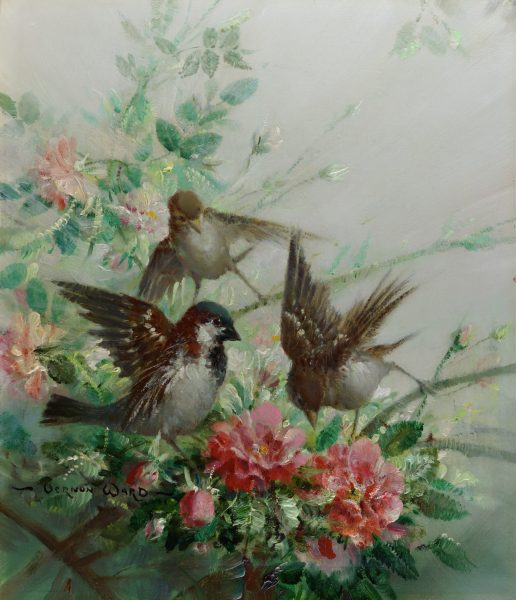 Sparrows and Spring Blossom by Vernon de Beauvoir Ward